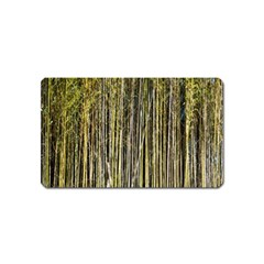 Bamboo Trees Background Magnet (name Card)