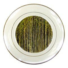 Bamboo Trees Background Porcelain Plates
