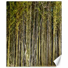 Bamboo Trees Background Canvas 8  x 10