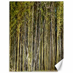 Bamboo Trees Background Canvas 12  x 16