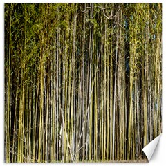 Bamboo Trees Background Canvas 16  x 16