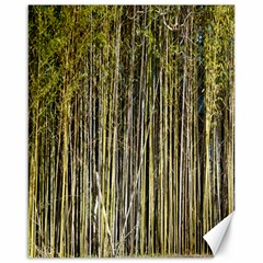 Bamboo Trees Background Canvas 16  x 20