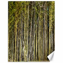 Bamboo Trees Background Canvas 18  x 24