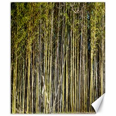 Bamboo Trees Background Canvas 20  x 24