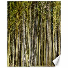 Bamboo Trees Background Canvas 11  x 14