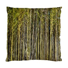 Bamboo Trees Background Standard Cushion Case (Two Sides)