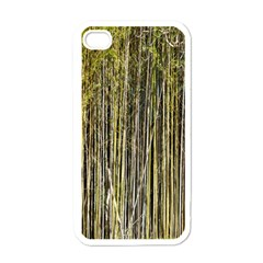 Bamboo Trees Background Apple iPhone 4 Case (White)