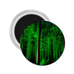 Spooky Forest With Illuminated Trees 2 25  Magnets