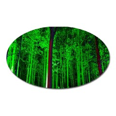 Spooky Forest With Illuminated Trees Oval Magnet
