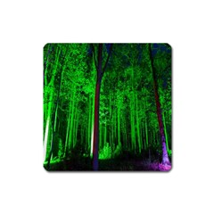 Spooky Forest With Illuminated Trees Square Magnet