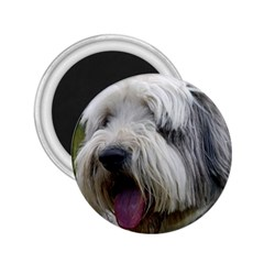 Bearded Collie 2.25  Magnets