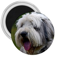 Bearded Collie 3  Magnets
