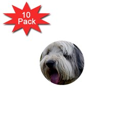 Bearded Collie 1  Mini Buttons (10 pack)