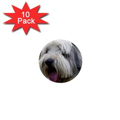 Bearded Collie 1  Mini Magnet (10 pack)