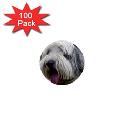 Bearded Collie 1  Mini Magnets (100 pack)