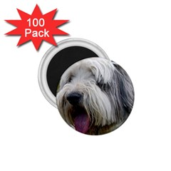 Bearded Collie 1.75  Magnets (100 pack)