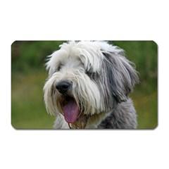 Bearded Collie Magnet (Rectangular)