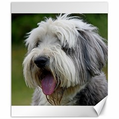 Bearded Collie Canvas 8  x 10