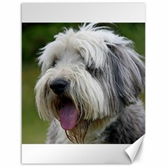 Bearded Collie Canvas 12  x 16
