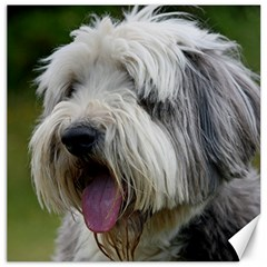 Bearded Collie Canvas 16  x 16