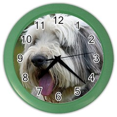 Bearded Collie Color Wall Clocks