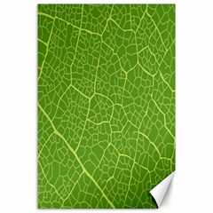 Green Leaf Line Canvas 24  x 36