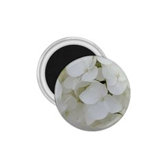 Hydrangea Flowers Blossom White Floral Photography Elegant Bridal Chic  1.75  Magnets