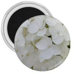 Hydrangea Flowers Blossom White Floral Photography Elegant Bridal Chic  3  Magnets