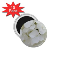 Hydrangea Flowers Blossom White Floral Photography Elegant Bridal Chic  1.75  Magnets (10 pack)