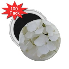 Hydrangea Flowers Blossom White Floral Photography Elegant Bridal Chic  2.25  Magnets (100 pack)