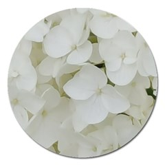 Hydrangea Flowers Blossom White Floral Photography Elegant Bridal Chic  Magnet 5  (Round)