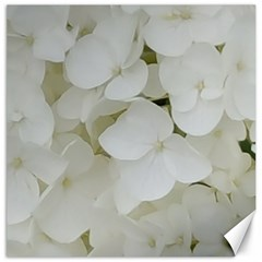 Hydrangea Flowers Blossom White Floral Photography Elegant Bridal Chic  Canvas 12  x 12