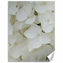 Hydrangea Flowers Blossom White Floral Photography Elegant Bridal Chic  Canvas 12  x 16