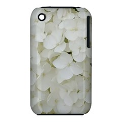 Hydrangea Flowers Blossom White Floral Photography Elegant Bridal Chic  iPhone 3S/3GS