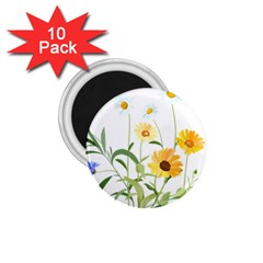 Flowers Flower Of The Field 1.75  Magnets (10 pack)