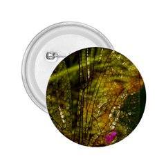Dragonfly Dragonfly Wing Insect 2.25  Buttons