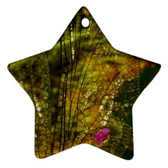 Dragonfly Dragonfly Wing Insect Ornament (Star)