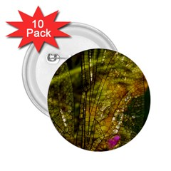 Dragonfly Dragonfly Wing Insect 2.25  Buttons (10 pack)