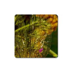 Dragonfly Dragonfly Wing Insect Square Magnet