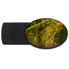 Dragonfly Dragonfly Wing Insect USB Flash Drive Oval (2 GB)