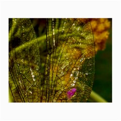 Dragonfly Dragonfly Wing Insect Small Glasses Cloth