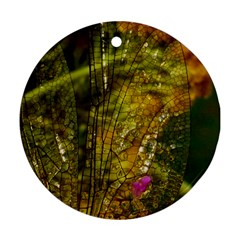 Dragonfly Dragonfly Wing Insect Round Ornament (two Sides)