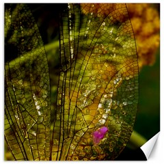 Dragonfly Dragonfly Wing Insect Canvas 12  X 12