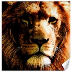 Lion  Canvas 16  x 16