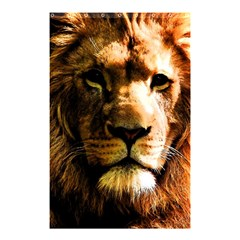 Lion  Shower Curtain 48  x 72  (Small)