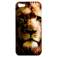 Lion  Apple iPhone 5 Hardshell Case