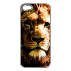 Lion  Apple iPhone 5 Case (Silver)