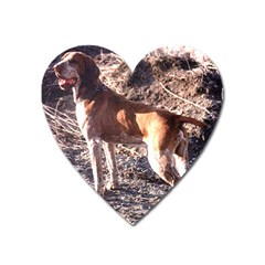 Bracco Italiano Full 2 Heart Magnet