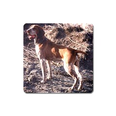 Bracco Italiano Full 2 Square Magnet