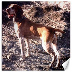 Bracco Italiano Full 2 Canvas 16  x 16
